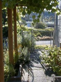 Dharma Gate Grape Arbor
