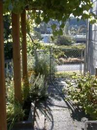 Dharma Gate Grape Arbor